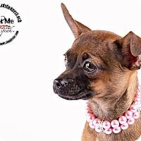 Adopt A Pet :: Pebbles - Lodi, CA
