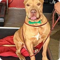 Adopt A Pet :: Bushwick - Tempe, AZ