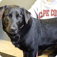 Adopt A Pet :: Moose - Sparta, NJ