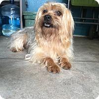 Adopt A Pet :: Whisky - San Antonio, TX