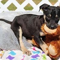 Adopt A Pet :: matt- I'm a love bug!! - Brattleboro, VT