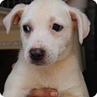Adopt A Pet :: Penny - Royal Palm Beach, FL