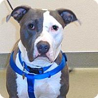 Adopt A Pet :: Biggie - Wildomar, CA