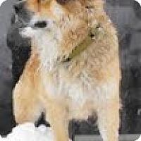 Adopt A Pet :: Einstein - Justin, TX