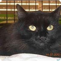 Adopt A Pet :: Shania - Riverside, RI