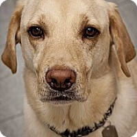 Adopt A Pet :: Aurelius - Houston, TX
