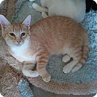 Adopt A Pet :: Natalie - Grand Rapids, MI