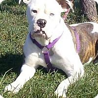 Adopt A Pet :: Shasta - Chandler, IN