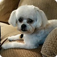 Adopt A Pet :: Buster - Rancho Mirage, CA