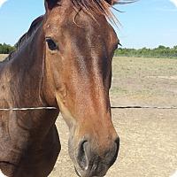 Adopt A Pet :: Mercy - Farmersville, TX