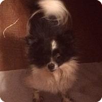 Adopt A Pet :: PANDA - Riverside, CA