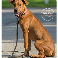 Adopt A Pet :: Ray - Georgetown, OH