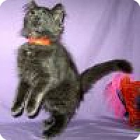 Adopt A Pet :: Dusty - Powell, OH