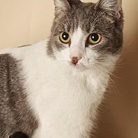 Adopt A Pet :: Kaci - Gilbert, AZ