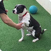 Adopt A Pet :: Mack - Sacramento, CA