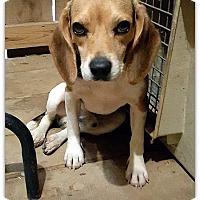 Adopt A Pet :: Bentley - Cookeville, TN