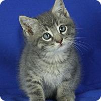 Adopt A Pet :: Roy - Winston-Salem, NC
