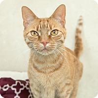 Adopt A Pet :: Squeaks - Wilmington, DE