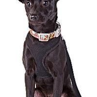 Adopt A Pet :: Simba - Lodi, CA