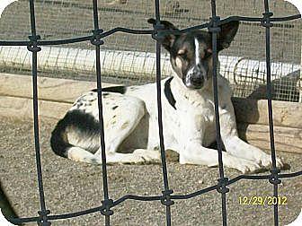Hound (Unknown Type)/Pointer Mix Dog for adoption in Mexia, Texas - Drew