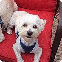 Adopt A Pet :: Jacob - Vaudreuil-Dorion, QC
