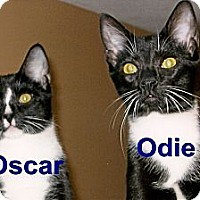 Adopt A Pet :: Oscar & Odie - Medway, MA