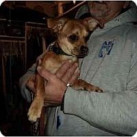 Adopt A Pet :: Brownie - Fresno, CA