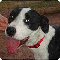 Adopt A Pet :: POLLYANNA - Phoenix, AZ