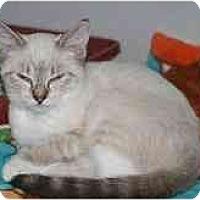 Adopt A Pet :: Jillian - Marietta, GA