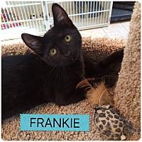 Adopt A Pet :: FRANKIE - Hamilton, NJ