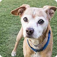 Adopt A Pet :: Chester - Agoura, CA