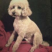 Adopt A Pet :: Fisher - Fresno, CA