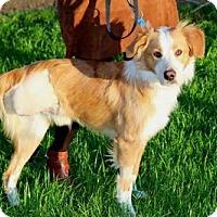 Adopt A Pet :: LUCA - Sussex, NJ