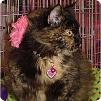 Adopt A Pet :: Poppy - Chesapeake, VA