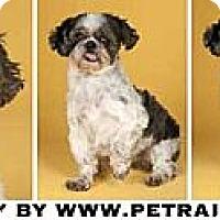 Adopt A Pet :: Balony - Chicago, IL