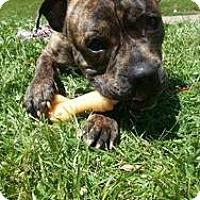 Adopt A Pet :: James - WARREN, OH