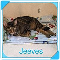 Adopt A Pet :: JEEVES - Hamilton, NJ