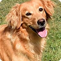 Adopt A Pet :: Jet - New Canaan, CT