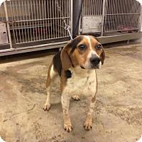 Adopt A Pet :: Clyde - Upper Sandusky, OH
