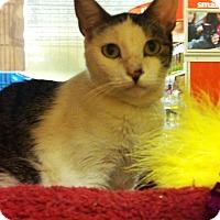 Adopt A Pet :: Spirit - Riverside, CA