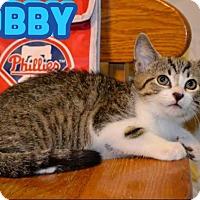 Adopt A Pet :: Bobby - Trevose, PA