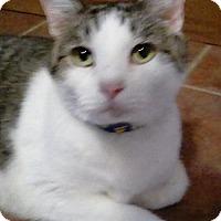 Adopt A Pet :: Leon - San Antonio, TX