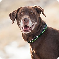 Adopt A Pet :: Jake - Washoe Valley, NV