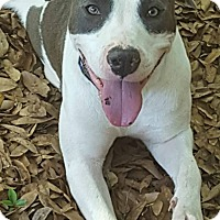 Adopt A Pet :: Greta - Pensacola, FL