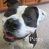 Adopt A Pet :: Petey - Warren, PA