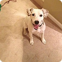 Adopt A Pet :: Orvis - Alexandria, VA