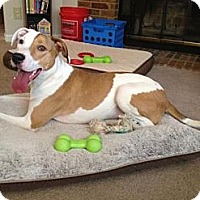 Adopt A Pet :: Crush - Southampton, PA