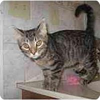 Adopt A Pet :: Lacey - Catasauqua, PA