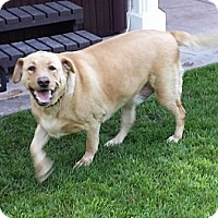 Adopt A Pet :: Chuck - Santa Monica, CA