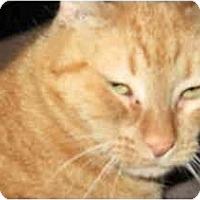 Adopt A Pet :: Piana - Scottsdale, AZ